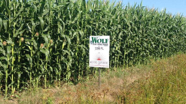 Wolf River Valley Seeds